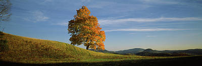 Sugar Maple Tree On A Hill, Peacham Print by Panoramic Images