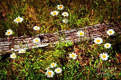 Summer Flowers On The Blue Ridge Parkway 7653 Print by Dan Carmichael