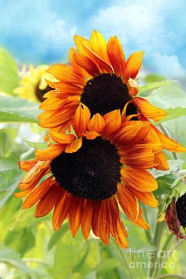 Holidays Digital Art - Sunflowers  by Mark Ashkenazi