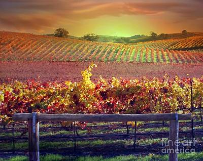 Sunrise Vineyard Print by Stephanie Laird