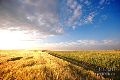 Country Photograph - Sunset Field by Michal Bednarek