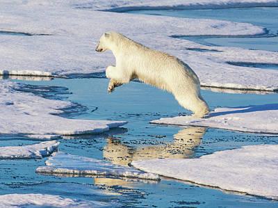 Svalbard, Norway Print by Janet Muir