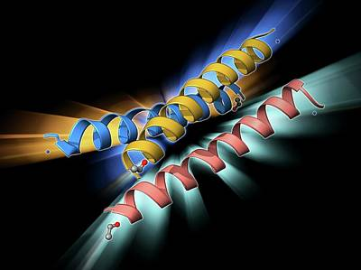 Helical Photograph - Synthetic Triple Helical Peptide Molecule by Laguna Design