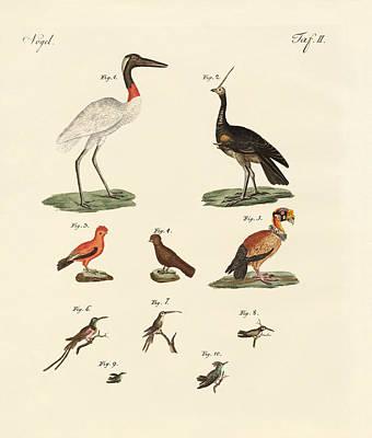 Vulture Drawing - Ten American Birds by Splendid Art Prints