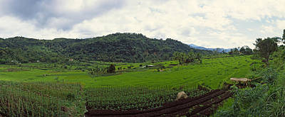Terraced Rice Field, Flores Island Print by Panoramic Images