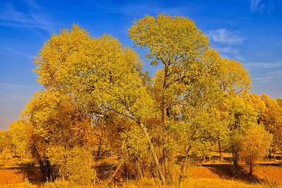 Autumn Photograph - Teton Autumn Foliage by Greg Norrell