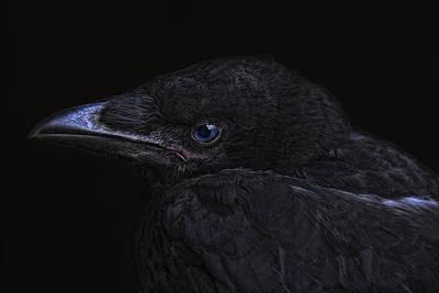The Crow Print by Joachim G Pinkawa