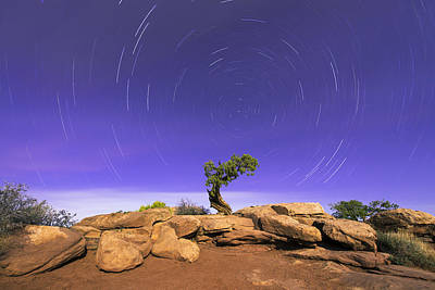 Desert Photograph - The Dreaming Tree by Dustin  LeFevre