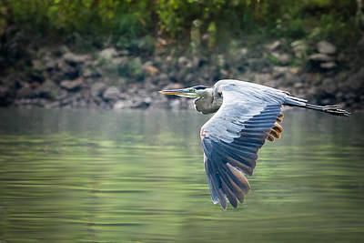 The Glide Print by Annette Hugen
