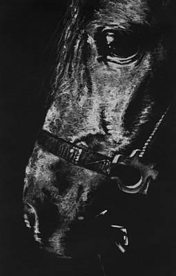 Custom Horse Portrait Drawing - The Horse by Natasha Denger