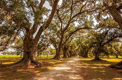 Plantation Photograph - The Lane by Steve Harrington