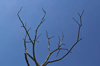 The Lightning Tree Print by David Pyatt