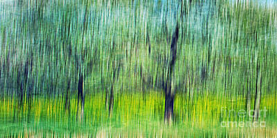 Wild Orchards Photograph - The Orchard by Darren Fisher
