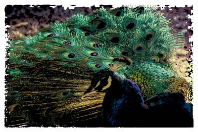 Pheasant Digital Art - The Peacock by David Patterson