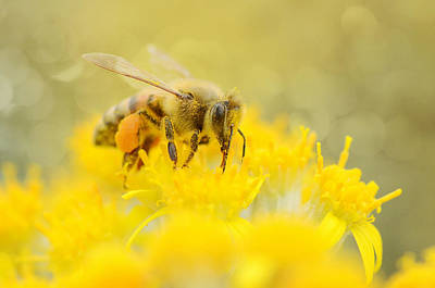 Gathering Photograph - The Pollinator by Fraida Gutovich