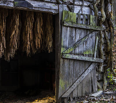 Murray Kentucky Photograph - The Tobacco Cures by Amber Kresge