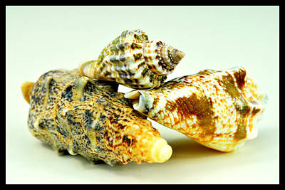 Three Seashells  Original by Toppart Sweden