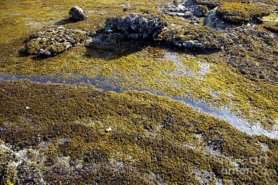 Hornby Island Photograph - Tide Pool by Graham Foulkes