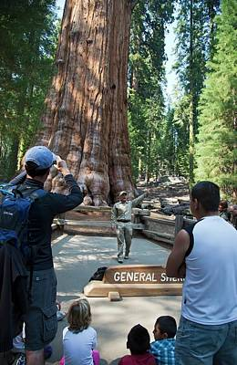 Tourists Visiting General Sherman Tree Print by Jim West