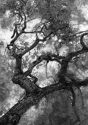 Cal Bears Photograph - Tree At Berkeley by Ron Regalado