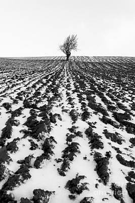 Tree In Snow Print by John Farnan