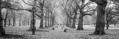 In A Row Photograph - Trees Along A Footpath In A Park, Green by Panoramic Images