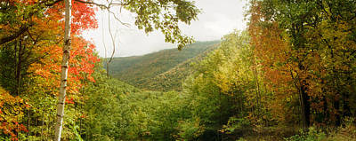 Catskill Photograph - Trees On Mountain During Autumn by Panoramic Images