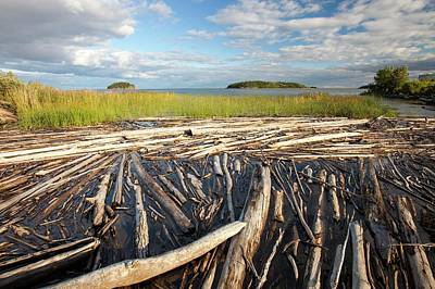 Destruction Photograph - Trees On The Shores Of Lake Athabasca by Ashley Cooper