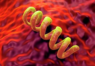 Treponema Pallidum Syphilis Bacterium Print by Science Artwork