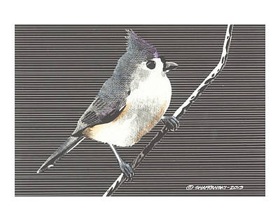 Titmouse Drawing - Tufted Titmouse by Paul Shafranski