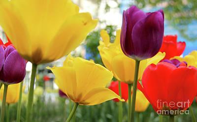 Tulip Digital Art - Tulips  by Mark Ashkenazi