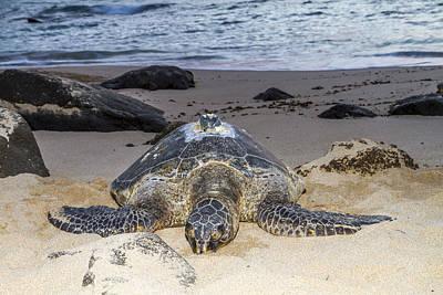 Turtle Beach Sunset Oahu Hawaii Print by Jianghui Zhang
