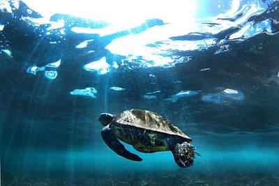 Hawaii Sea Turtle Photograph - Turtle Rays by Sean Davey