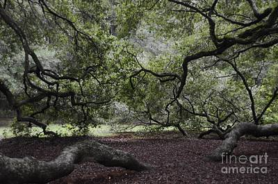 Angel Island State Park Photograph - Under The Tree by Kathleen Struckle