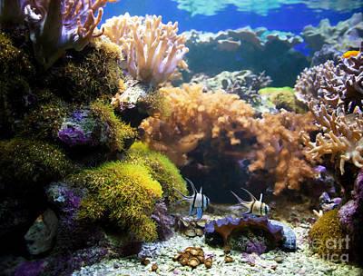 Sea Photograph - Underwater Life by Michal Bednarek