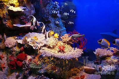 Bubble Photograph - Underwater Scene by Michal Bednarek