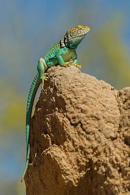 Sonora Photograph - Usa, Arizona-sonora Desert Museum by Jaynes Gallery