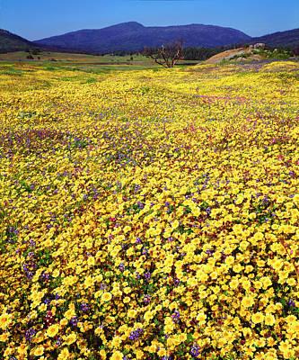 Usa, California, Cuyamaca Rancho State Print by Jaynes Gallery