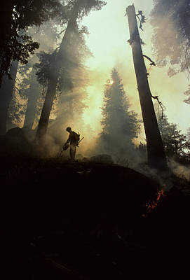 Usa, California, Forest Fire, Sequoia Print by Gerry Reynolds