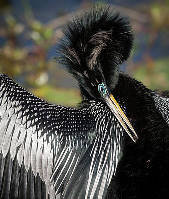Anhinga Photograph - Usa, Florida, Everglades National Park by Jaynes Gallery