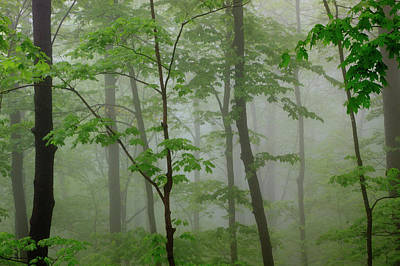 Usa, Tennessee, Foggy Morning Print by Joanne Wells