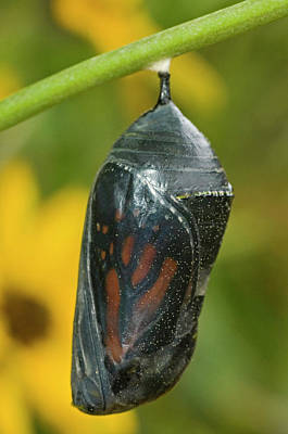 Cocoon Photograph - Usa, Texas, Hill Country by Jaynes Gallery