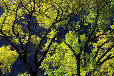 Zion National Park Photograph - Usa, Utah, Zion National Park, Grotto by Jaynes Gallery