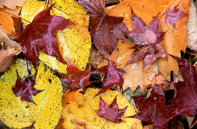 Ussurian Taiga Autumn Print by Anonymous