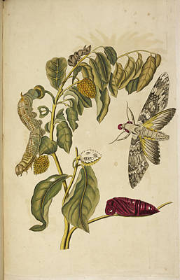 Het Photograph - Various Insects Around A Plant by British Library
