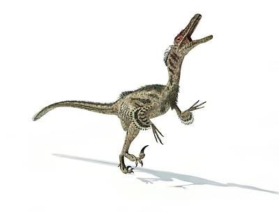Velociraptor Dinosaur Print by Leonello Calvetti