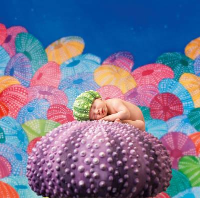 Vince As A Sea Urchin Print by Anne Geddes