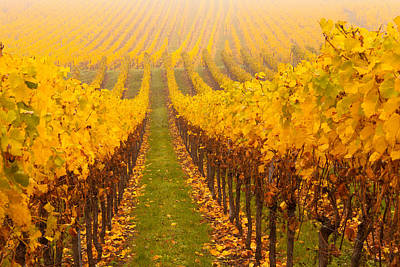 Viniculture Photograph - Vine Crop In A Vineyard, Riquewihr by Panoramic Images