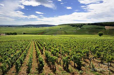 Vineyard Of Cotes De Beaune. Cote D'or. Burgundy. France. Europe Print by Bernard Jaubert