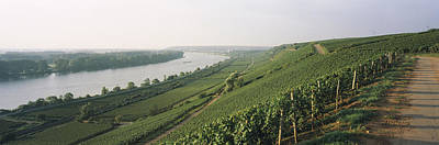 Vineyards Along A River, Niersteiner Print by Panoramic Images